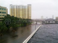 Shark Swims On Bayshore Blvd in Tampa, FL after Tropical Storm Debby